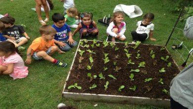 Photo of Предвижда се  има зеленчукова градина в детските градини