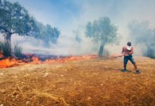Photo of Опазване на земеделските земи и реколтата от пожари през лятото